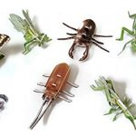 3D Insect Puzzles