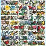 White Mountain Puzzles State Birds and Flowers - 1000 Piece Jigsaw Puzzle
